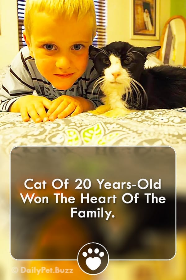 Cat Of 20 Years-Old Won The Heart Of The Family.