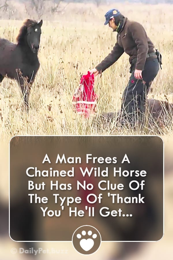 A Man Frees A Chained Wild Horse But Has No Clue Of The Type Of \'Thank You\' He\'ll Get...