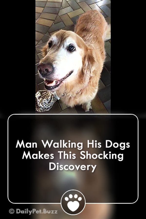 Man Walking His Dogs Makes This Shocking Discovery