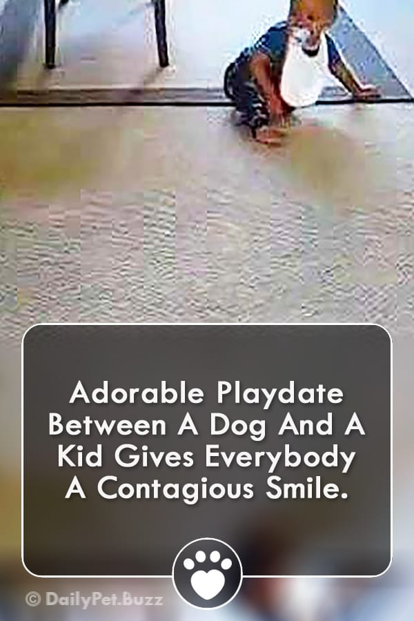 Adorable Playdate Between A Dog And A Kid Gives Everybody A Contagious Smile.