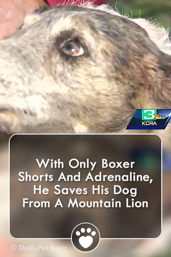 With Only Boxer Shorts And Adrenaline, He Saves His Dog From A Mountain Lion