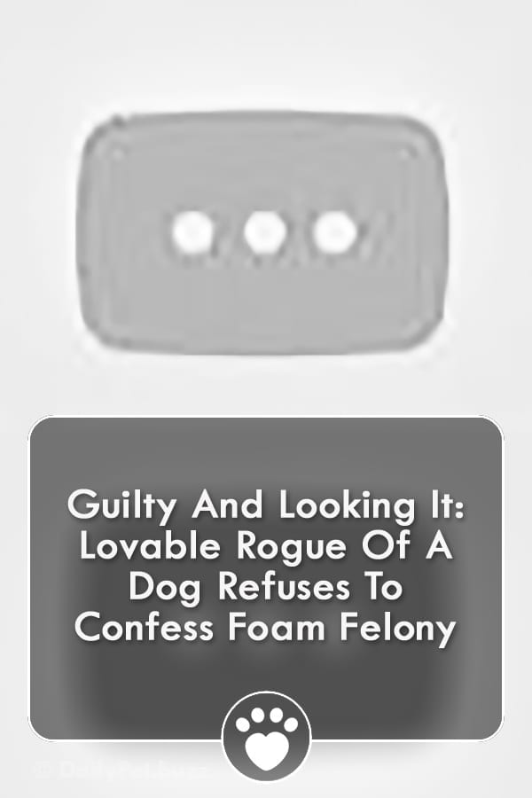 Guilty And Looking It: Lovable Rogue Of A Dog Refuses To Confess Foam Felony