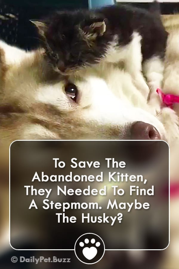 To Save The Abandoned Kitten, They Needed To Find A Stepmom. Maybe The Husky?