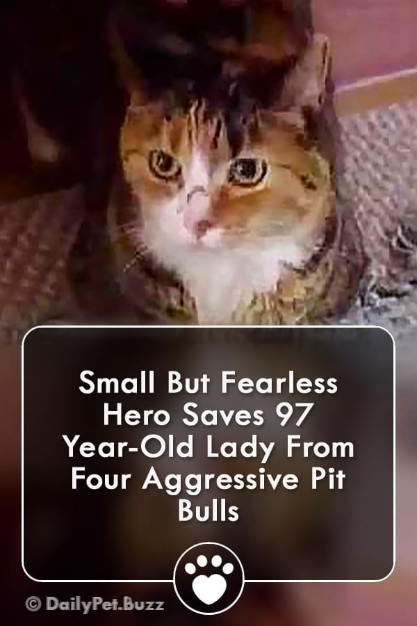 Small But Fearless Hero Saves 97 Year-Old Lady From Four Aggressive Pit Bulls