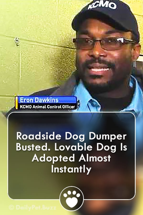 Roadside Dog Dumper Busted. Lovable Dog Is Adopted Almost Instantly