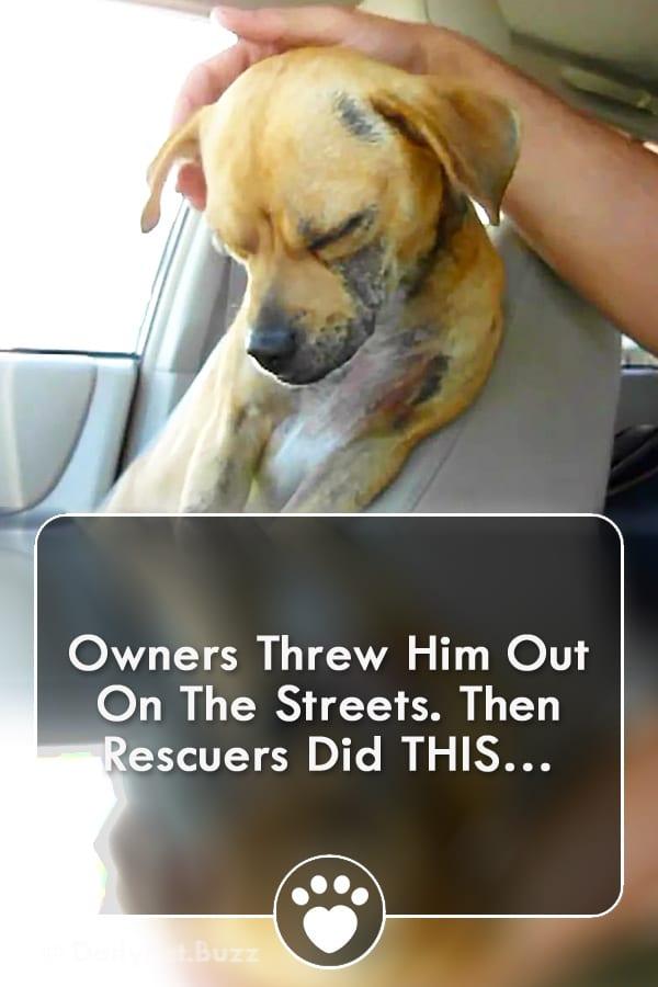 Owners Threw Him Out On The Streets. Then Rescuers Did THIS…