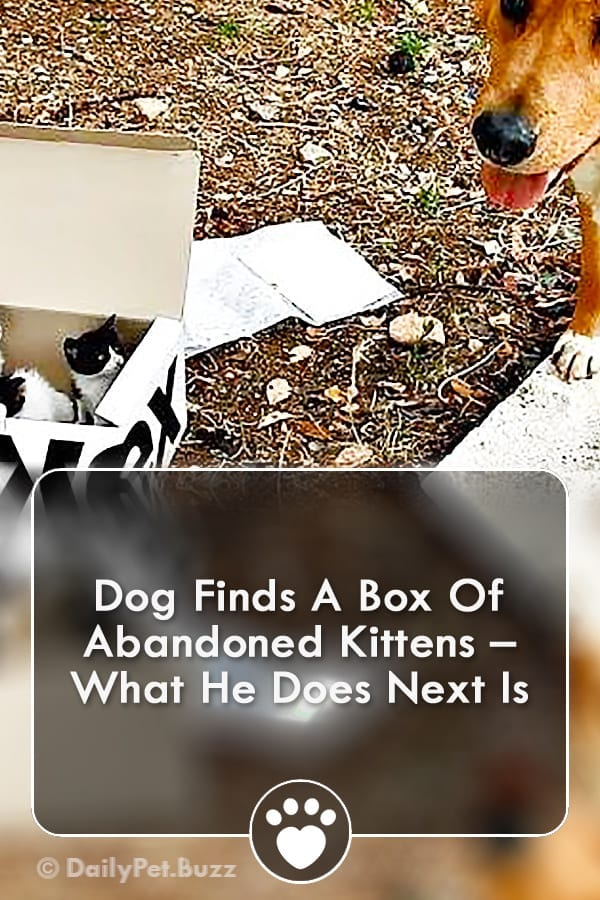 Dog Finds A Box Of Abandoned Kittens – What He Does Next Is