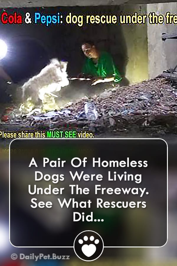 A Pair Of Homeless Dogs Were Living Under The Freeway. See What Rescuers Did...