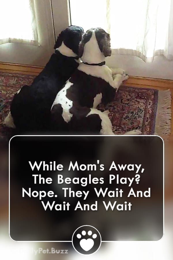 While Mom\'s Away, The Beagles Play? Nope. They Wait And Wait And Wait