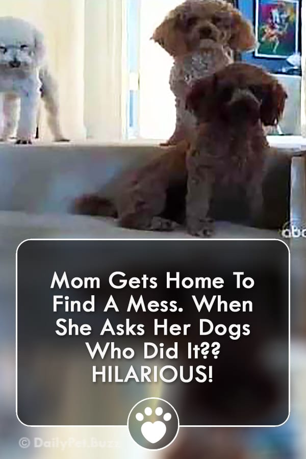 Mom Gets Home To Find A Mess. When She Asks Her Dogs Who Did It?? HILARIOUS!