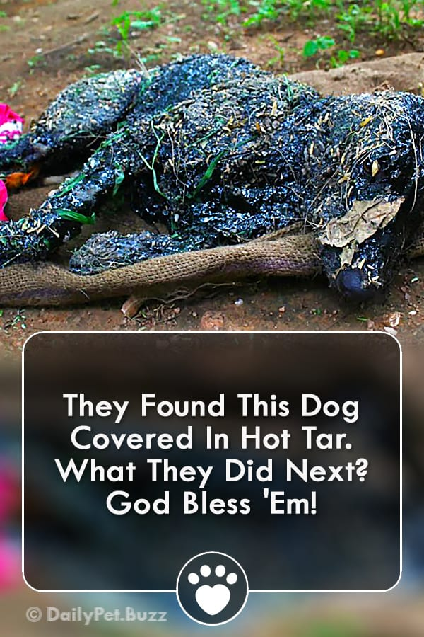 They Found This Dog Covered In Hot Tar. What They Did Next? God Bless \'Em!