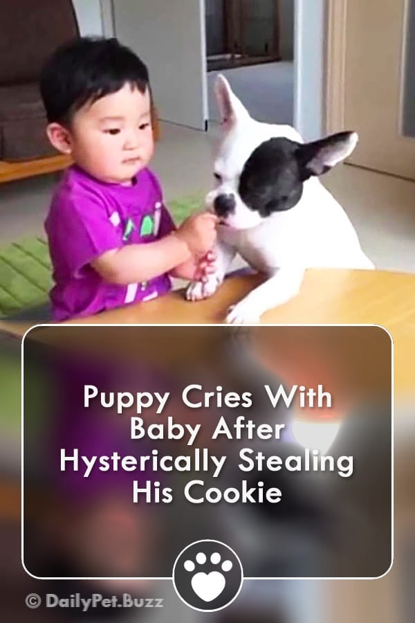 Puppy Cries With Baby After Hysterically Stealing His Cookie