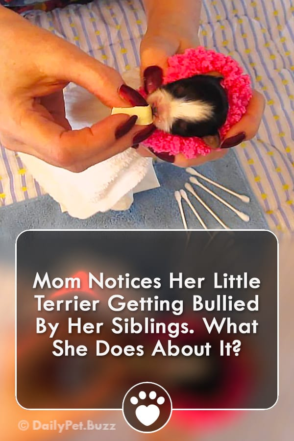 Mom Notices Her Little Terrier Getting Bullied By Her Siblings. What She Does About It?