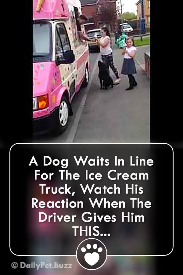 A Dog Waits In Line For The Ice Cream Truck, Watch His Reaction When The Driver Gives Him THIS...