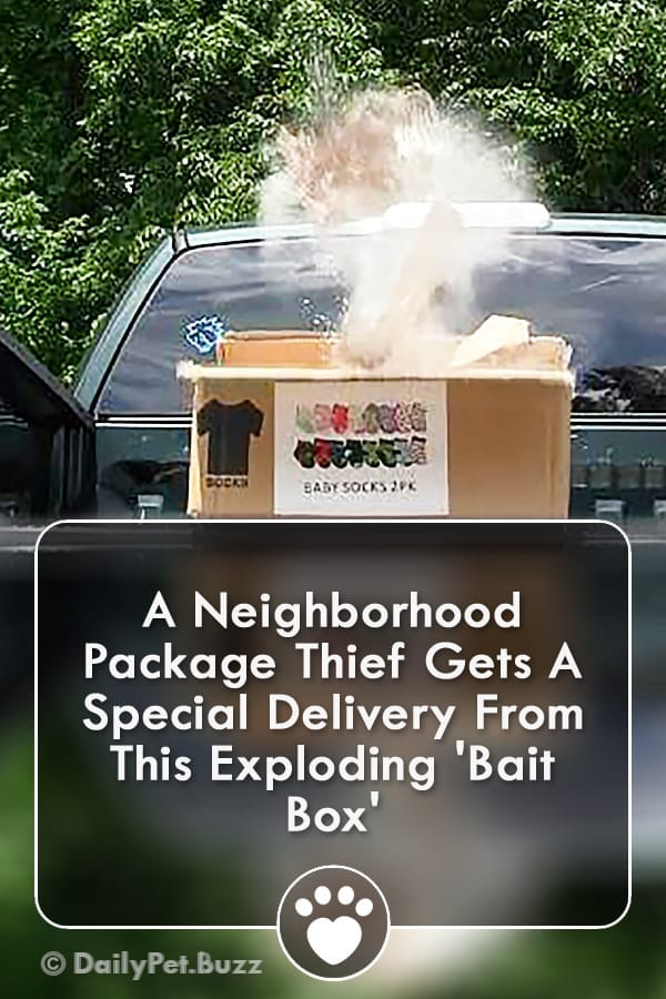 A Neighborhood Package Thief Gets A Special Delivery From This Exploding \'Bait Box\'