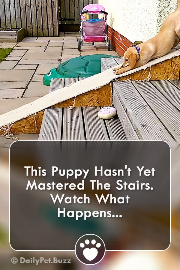 This Puppy Hasn\'t Yet Mastered The Stairs. Watch What Happens...