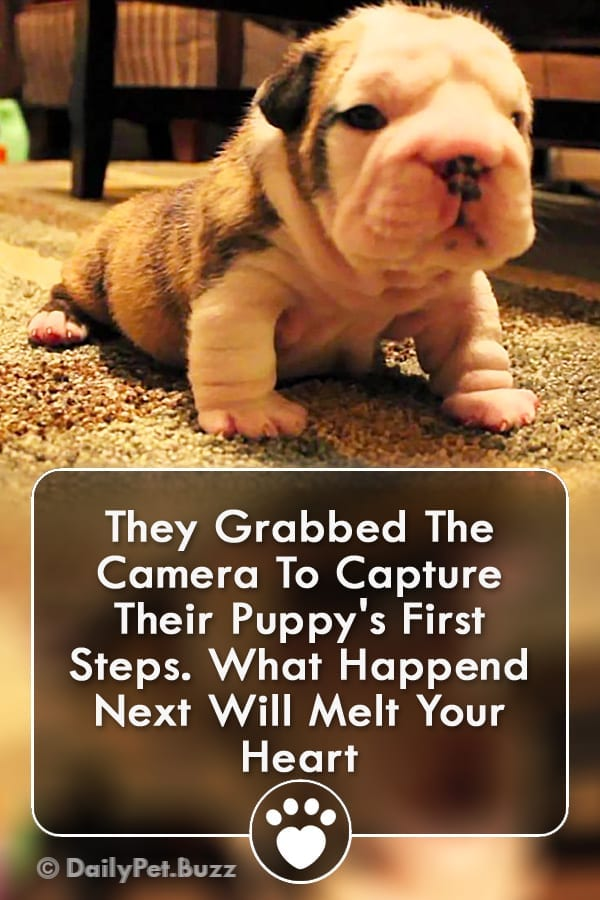 They Grabbed The Camera To Capture Their Puppy\'s First Steps. What Happend Next Will Melt Your Heart