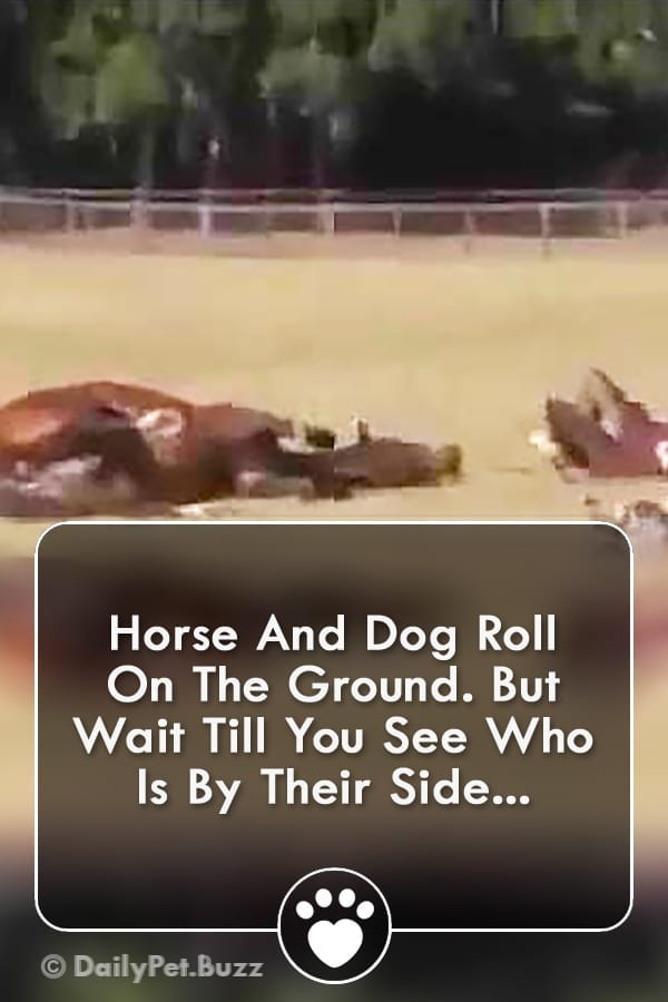 Horse And Dog Roll On The Ground. But Wait Till You See Who Is By Their Side...