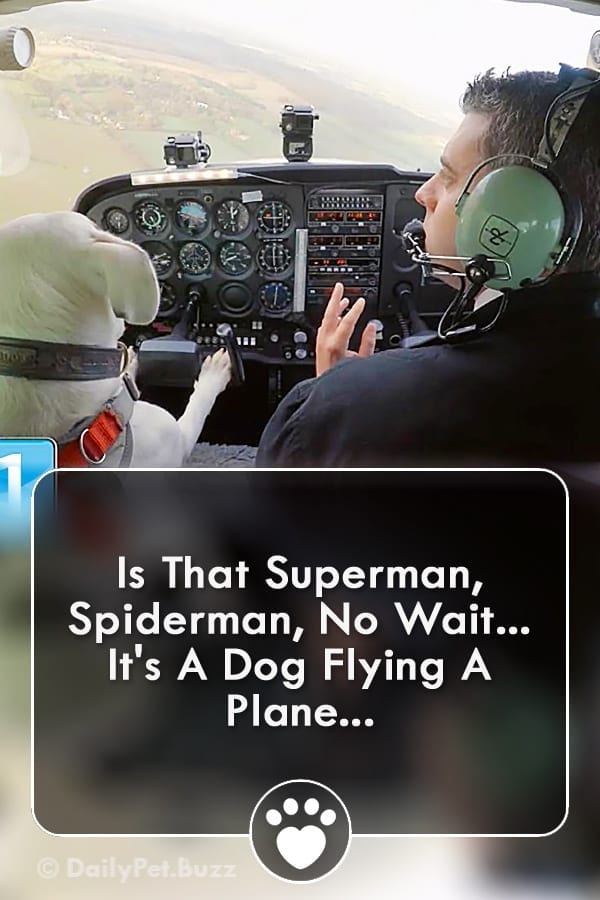 Is That Superman, Spiderman, No Wait... It\'s A Dog Flying A Plane...