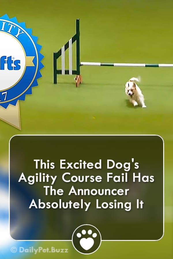 This Excited Dog\'s Agility Course Fail Has The Announcer Absolutely Losing It