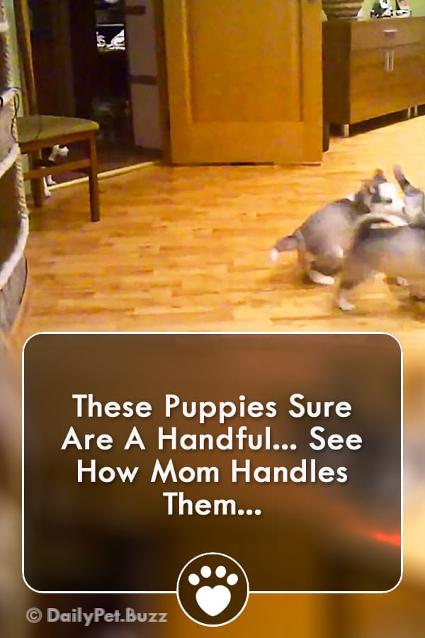 These Puppies Sure Are A Handful... See How Mom Handles Them...
