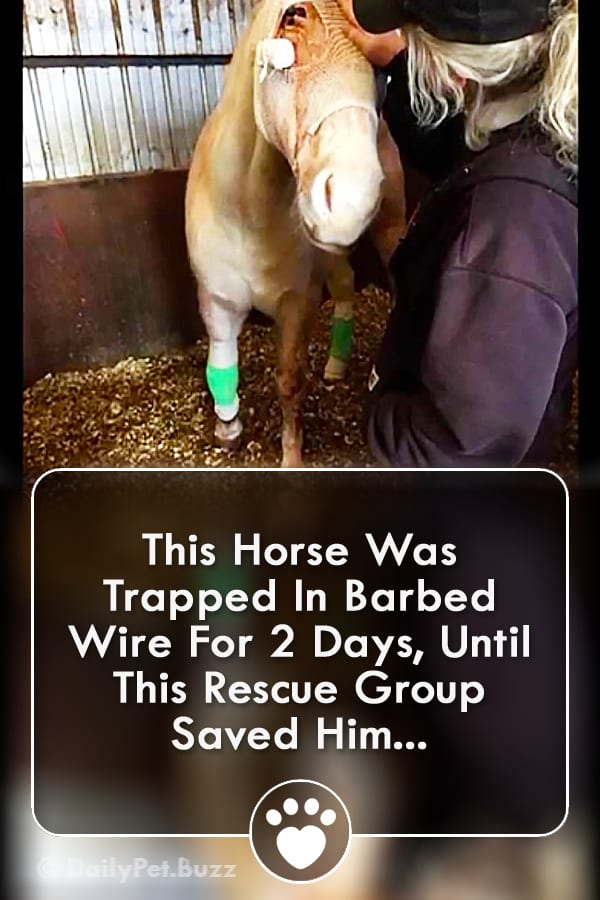 This Horse Was Trapped In Barbed Wire For 2 Days, Until This Rescue Group Saved Him...