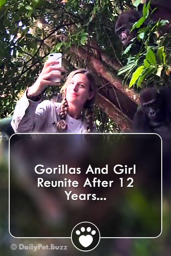 Gorillas And Girl Reunite After 12 Years...