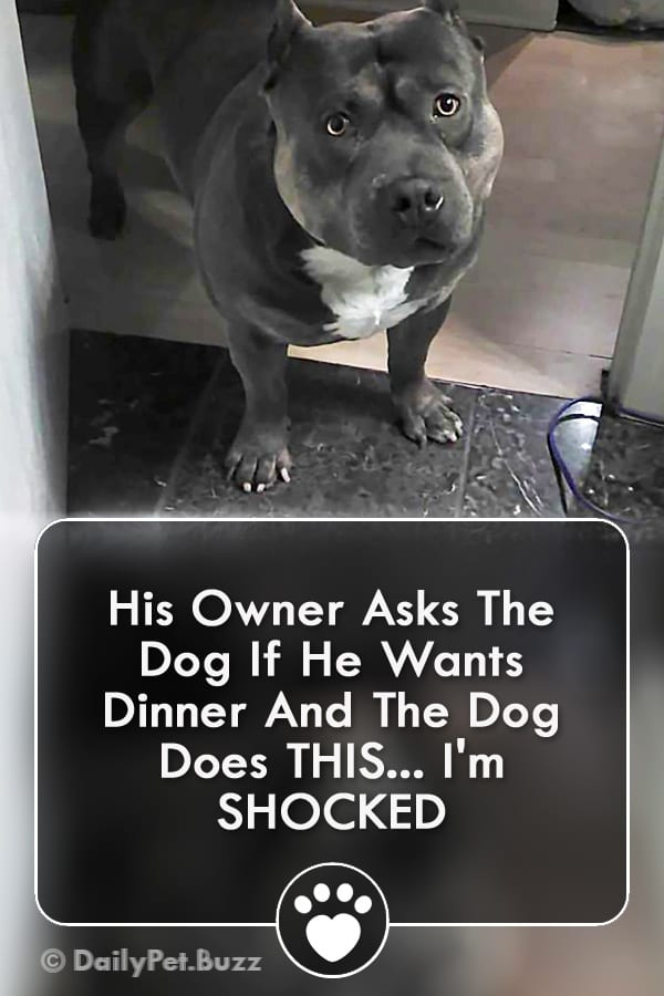 His Owner Asks The Dog If He Wants Dinner And The Dog Does THIS... I\'m SHOCKED