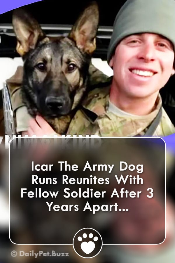 Icar The Army Dog Runs Reunites With Fellow Soldier After 3 Years Apart...