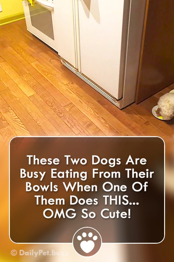 These Two Dogs Are Busy Eating From Their Bowls When One Of Them Does THIS... OMG So Cute!