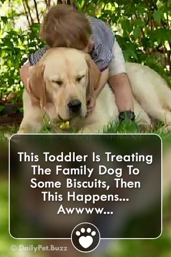 This Toddler Is Treating The Family Dog To Some Biscuits, Then THIS Happens... Awwww...