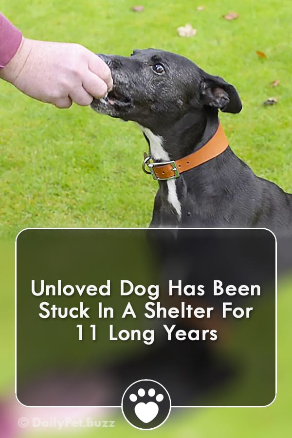 Unloved Dog Has Been Stuck In A Shelter For 11 Long Years