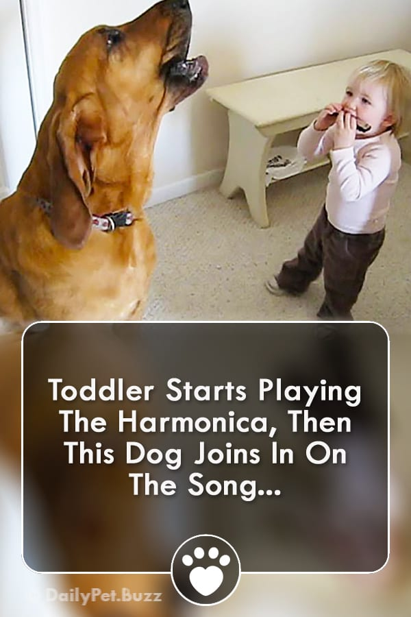 Toddler Starts Playing The Harmonica, Then This Dog Joins In On The Song...