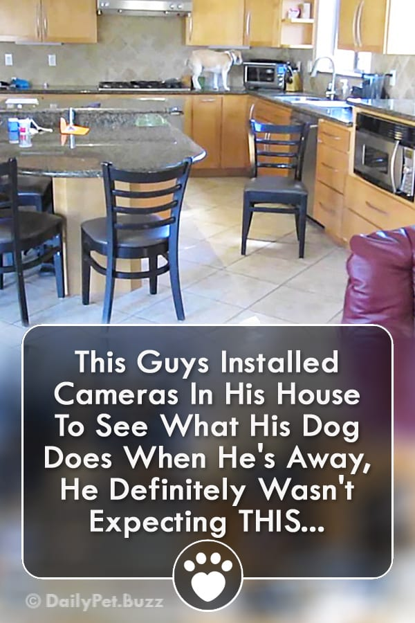 This Guys Installed Cameras In His House To See What His Dog Does When He\'s Away, He Definitely Wasn\'t Expecting THIS...