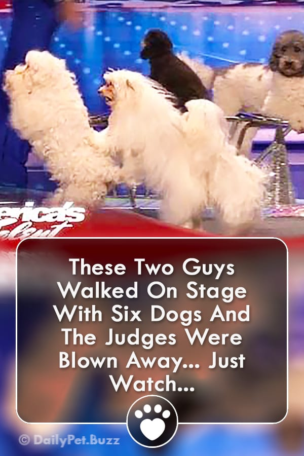 These Two Guys Walked On Stage With Six Dogs And The Judges Were Blown Away... Just Watch...
