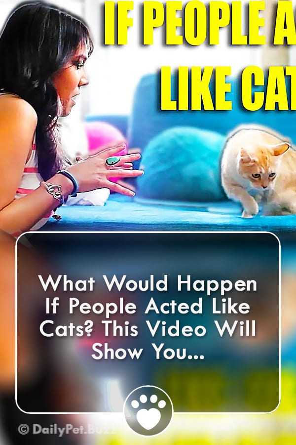 What Would Happen If People Acted Like Cats? This Video Will Show You...