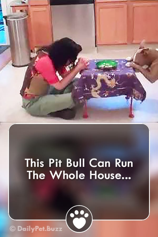This Pit Bull Can Run The Whole House...