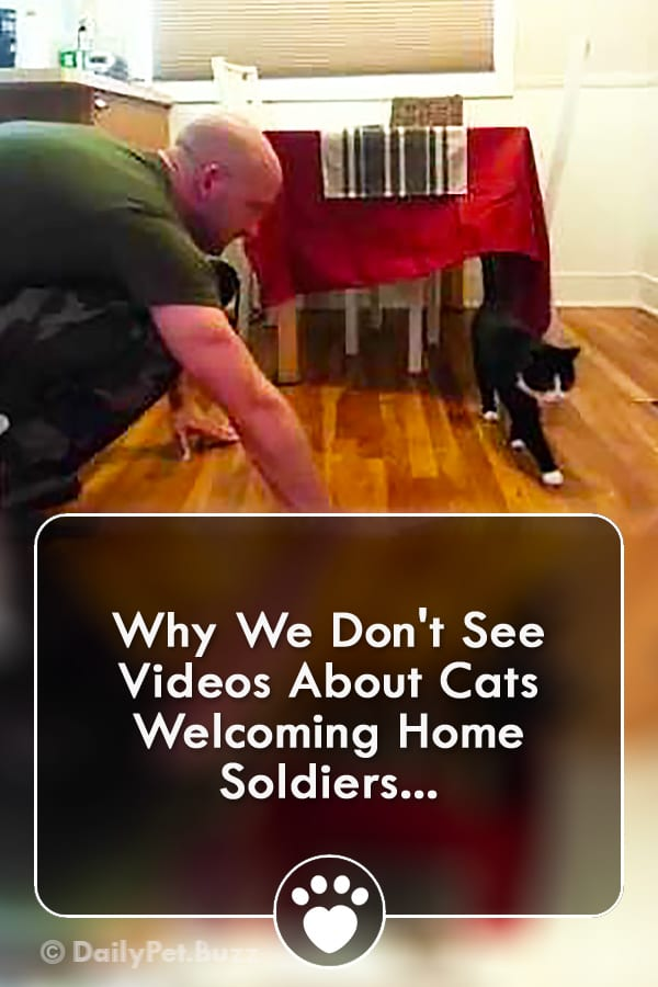 Why We Don\'t See Videos About Cats Welcoming Home Soldiers...