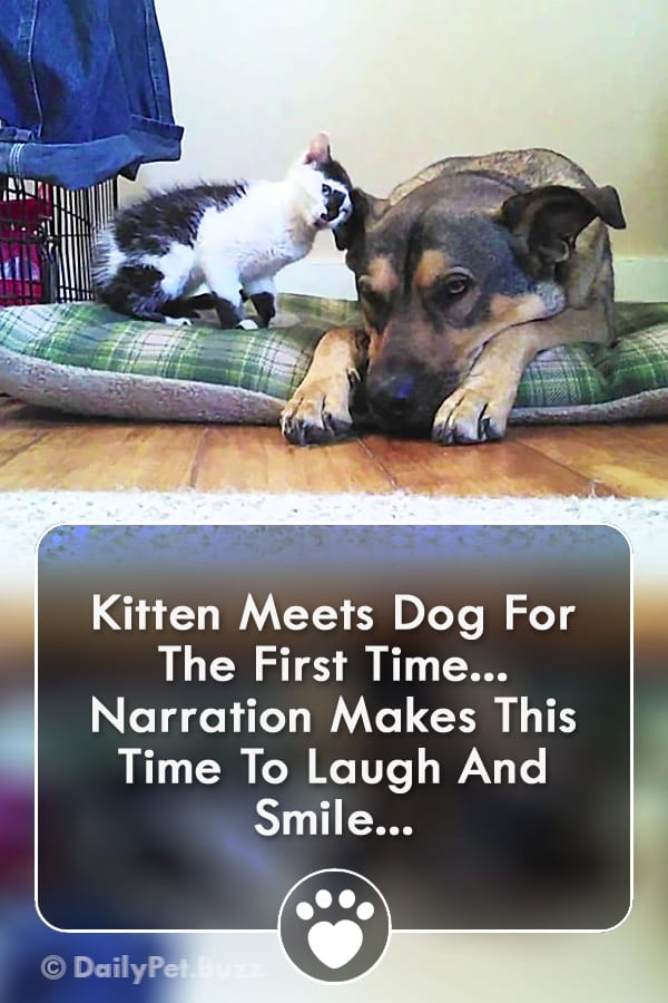 Kitten Meets Dog For The First Time... Narration Makes This  Time To Laugh And Smile!