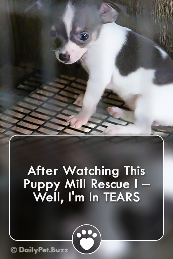 After Watching This Puppy Mill Rescue I – Well, I\'m In TEARS