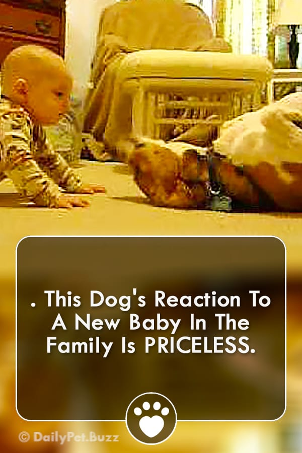 . This Dog\'s Reaction To A New Baby In The Family Is PRICELESS.