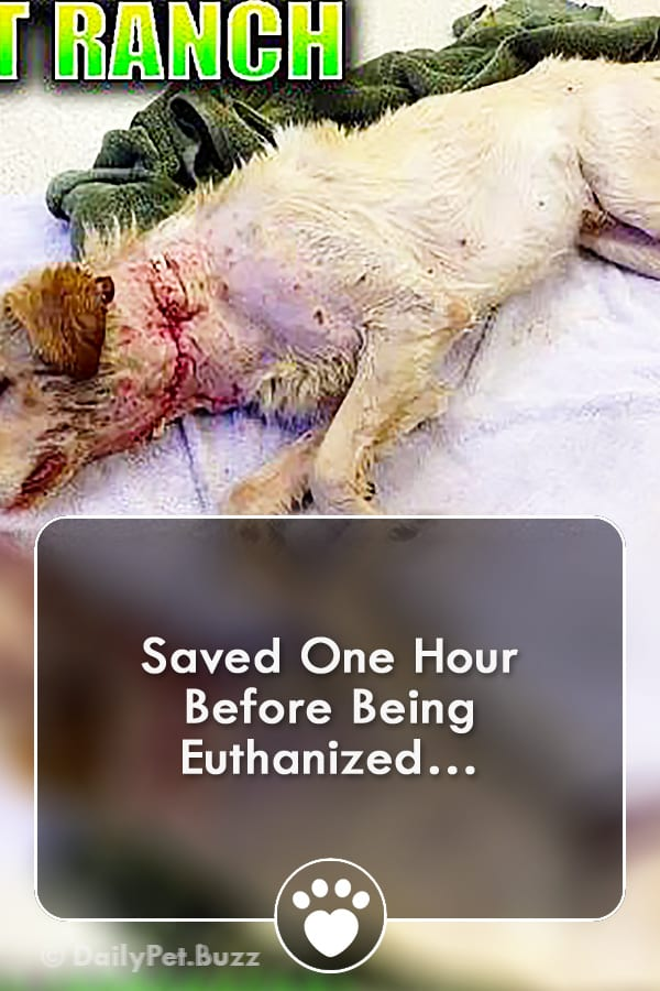 Saved One Hour Before Being Euthanized…