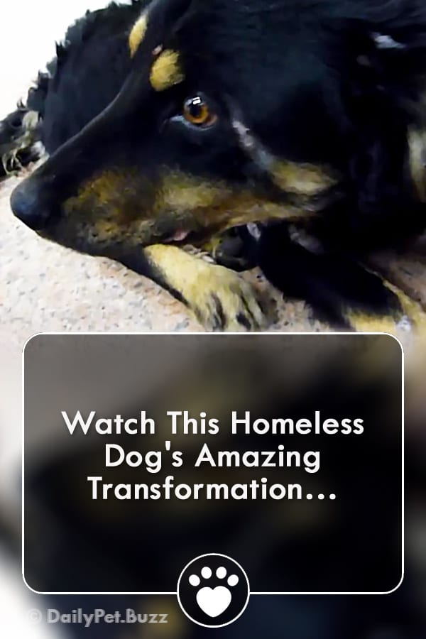 Watch This Homeless Dog\'s Amazing Transformation…