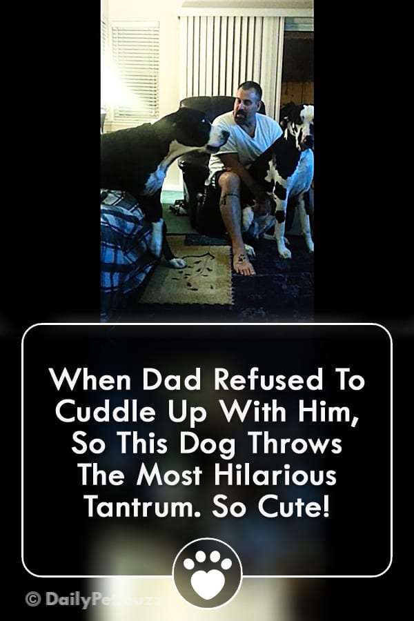 When Dad Refused To Cuddle Up With Him, So This Dog Throws The Most Hilarious Tantrum. So Cute!