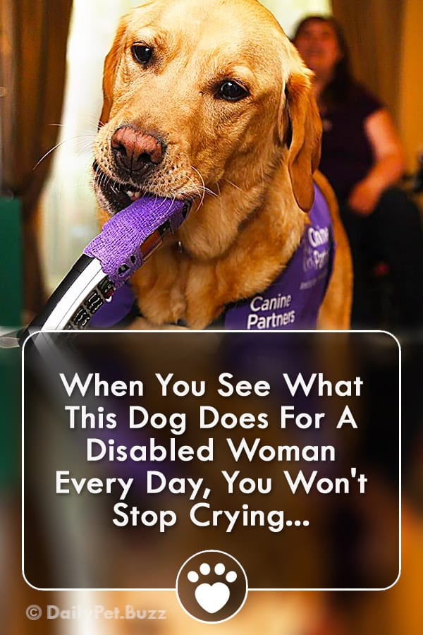When You See What This Dog Does For A Disabled Woman Every Day, You Won\'t Stop Crying...