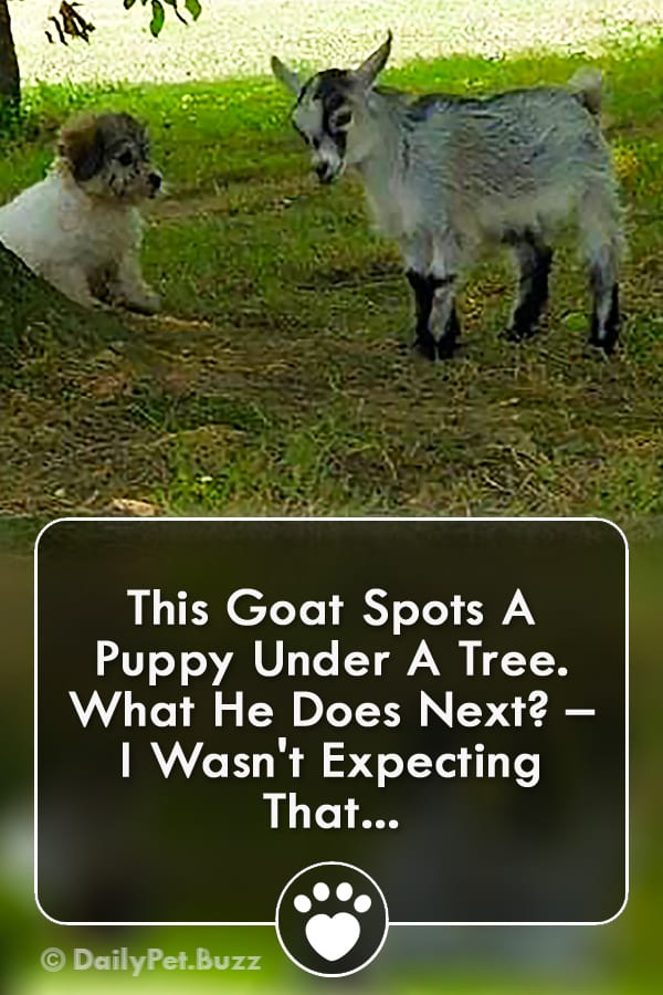 This Goat Spots A Puppy Under A Tree. What He Does Next? – I Wasn\'t Expecting That...