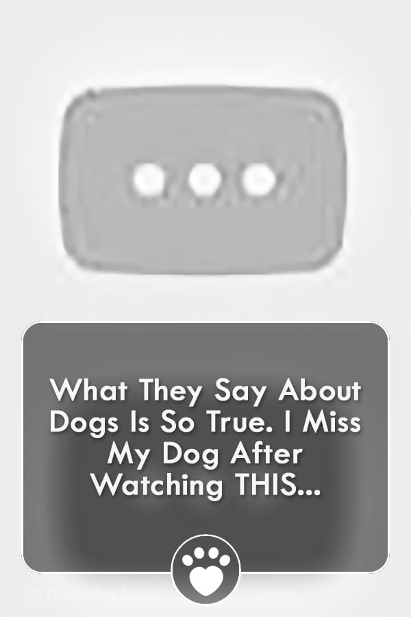 What They Say About Dogs Is So True. I Miss My Dog After Watching THIS...