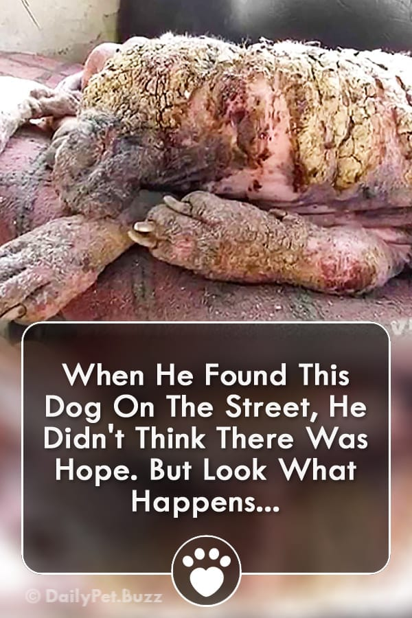 When He Found This Dog On The Street, He Didn\'t Think There Was Hope. But Look What Happens...