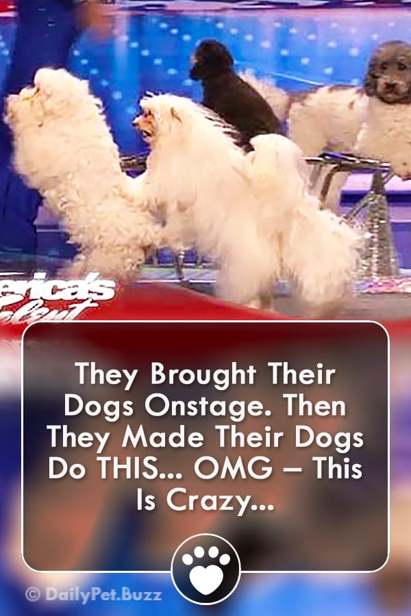 They Brought Their Dogs Onstage. Then They Made Their Dogs Do THIS... OMG – This Is Crazy...
