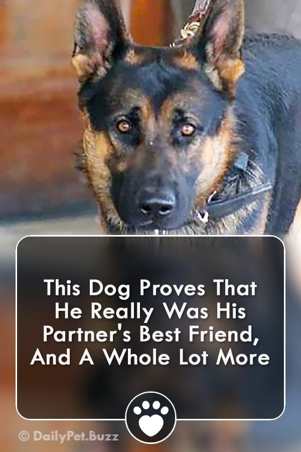 This Dog Proves That He Really Was His Partner\'s Best Friend, And A Whole Lot More